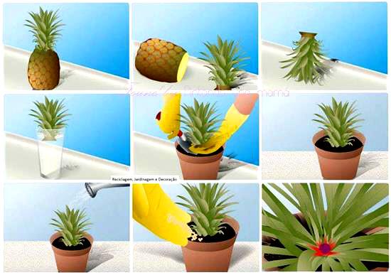 planta_hojas_de_pina