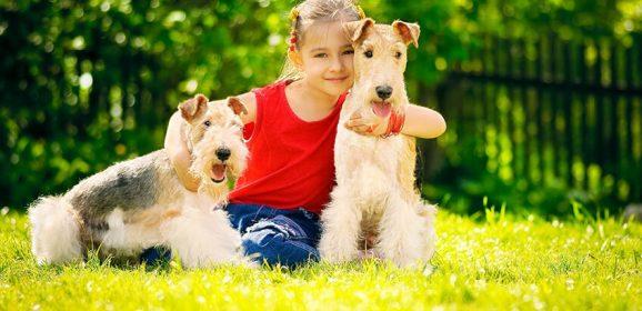 Elegir el Mejor Perro para Nuestra Familia